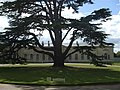 Large tree, Woburn - geograph.org.uk - 908960.jpg