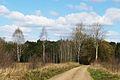 Lasy okolice Miaczynka (7).JPG