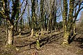 Late Winter Woodland - geograph.org.uk - 1755077.jpg