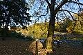 Le long de l'étang Tenreuken (22737791550).jpg