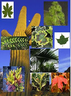 Evolutionary history of plants