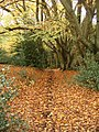Leafy path - geograph.org.uk - 1081939.jpg