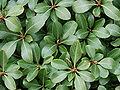 Leaves-4136.jpg