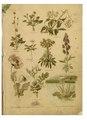 """Leclerc Du Sablon, Mathieu (1859-1944), """"Nos fleurs, plantes utiles et nuisibles""""...pdf"""