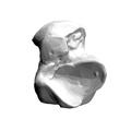 Left Talus bone 13 inferior view.png