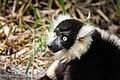 Lemur (27618419218).jpg