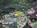 Leuchtender Goldfisch.JPG