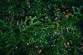 Lichens (9822063346).jpg