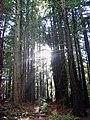 Light through the trees Bosch Baha'i school.jpg