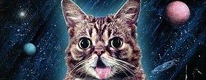 Lil-Bub-2013.jpg