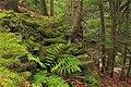 Little Rocky Glen Preserve (7) (8173781904).jpg