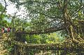 Living Root Bridges.jpg