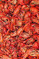Lots of crawfish.jpg