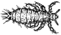 Louse (PSF).png