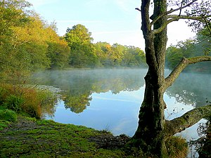 English: Lower Cannop Pond; October morning mi...