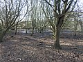 Lower Halstow brickfields 8052.jpg