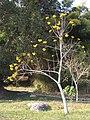 Luang Prabang Botanic Gardens (33440057701).jpg