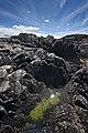 Luinga Mhor Rock Pool - panoramio.jpg