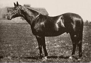 Luke McLuke 20th-century American Thoroughbred racehorse