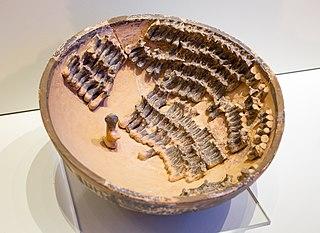 Palaikastro terracotta bowl with sheep