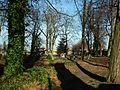 MOs810 WG 55 2016 Pyzdry Forest III (Evangelical Cemetery in Stawiszyn) (4).jpg