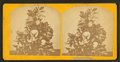 Magnolia in blossom, from Robert N. Dennis collection of stereoscopic views.png