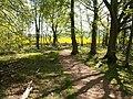 Magus Muir Millennium woodland - geograph.org.uk - 167514.jpg