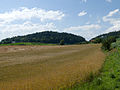 Mannenberg SO Getreidefeld.jpg