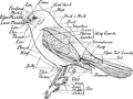 Map of the Bird-Birdcraft-0068-5.png