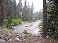 Marble Fork Kaweah Forest.jpg