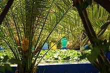 Maroc Marrakech Majorelle Luc Viatour 9.jpg