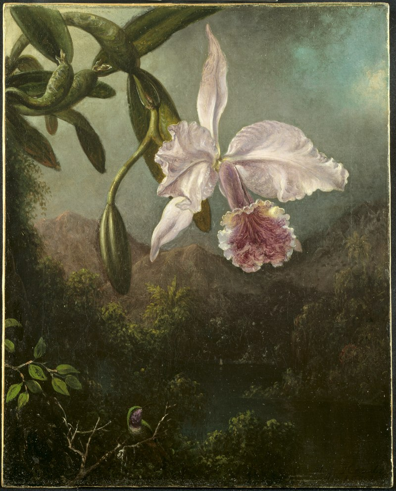 Martin Johnson Heade - Orchid Blossoms - 461.1915 - Cleveland Museum of Art.tiff