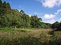 Meadow by Millook Water - geograph.org.uk - 498468.jpg