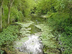 River Meon - River Meon Spring