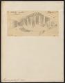 Mesoprion gembra - - Print - Iconographia Zoologica - Special Collections University of Amsterdam - UBA01 IZ12900300.tif