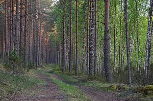 Korela, Estonia - Image: Metsatee Mustoja maastikukaitsealal