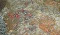 Mineraly.sk - ortut.jpg