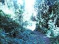 Mkuzi Forest.jpg