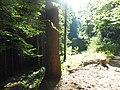Montbronn - Kambacher Thal 02.jpg