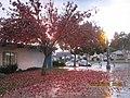 Monterey Park, CA, USA - panoramio (231).jpg