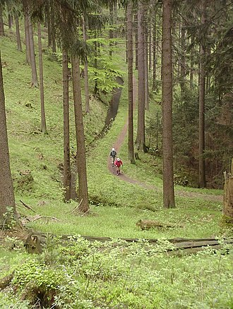 Upper Harz Ditches - Walkers by the Morgenbrodstal Ditch near Dammhaus