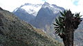 Mt.Speke2008.jpg