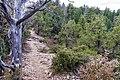 Munds Mountain Trail (24980742038).jpg