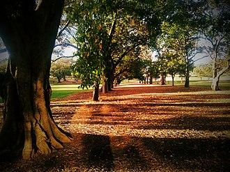Musgrave Park, Brisbane - Image: Musgrave Park, Brisbane