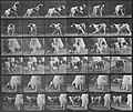 Muybridge, Eadweard - Kate dreht sich um (1.74 Sekunden) (Zeno Fotografie).jpg