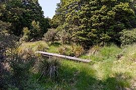 Myttons Creek, Kahurangi National Park, New Zealand 28.jpg