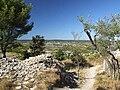 Nages Oppidum Roque de Viou 3978.JPG