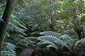National botanical gardens rainforest tour03.jpg
