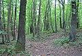 National nature reserve Karlstejn (5).jpg