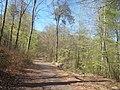 Natur Pfälzerwald bei Kaiserslautern 3.jpg